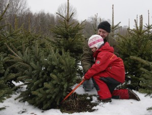 Berlin Citizens Shop For Christmas Trees