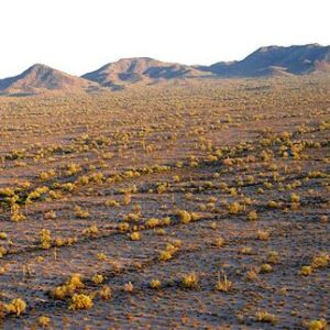 brown western landscape