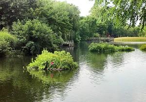 jackson pond island