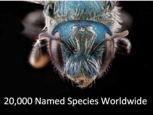 20K species