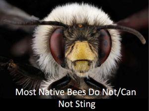 Native_no_sting