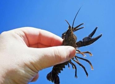 Crayfish3
